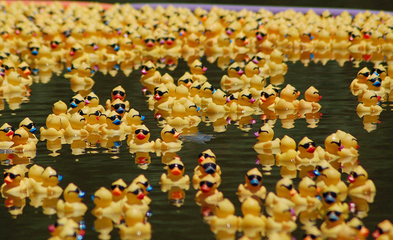 Adopt a rubber duck for a chance to win a million bucks | TheDigitel